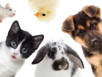 Les 11, 12, 14 & 15 déc 2017 | Collecte pour les animaux des refuges